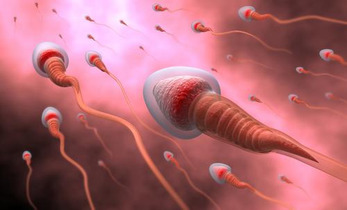精子 卵管