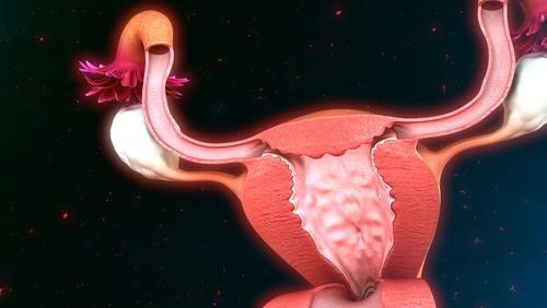 子宮 断面図