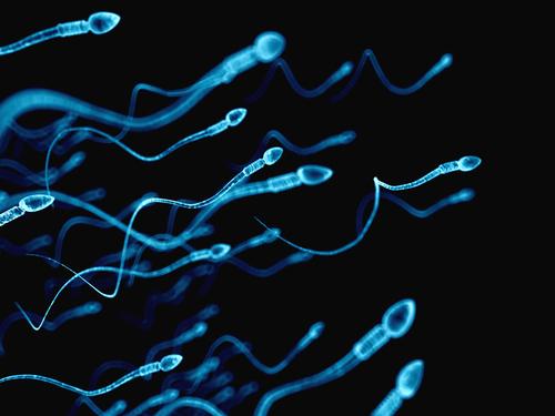 精子 子宮