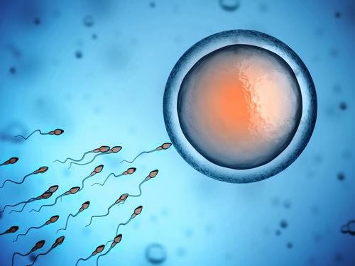 精子 卵子 受精